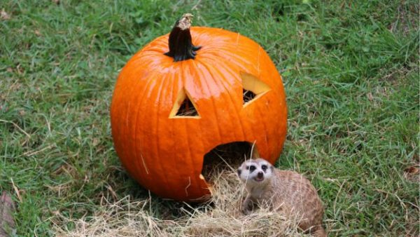 disney animal kingdom halloween