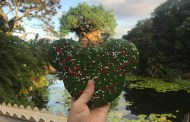 Jumbo Mickey Shaped Sugar Cookie Gets Very Merry At Disney's Animal Kingdom