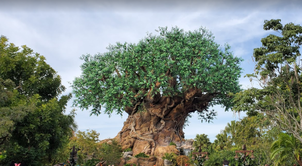 Animal Kingdom hours extended