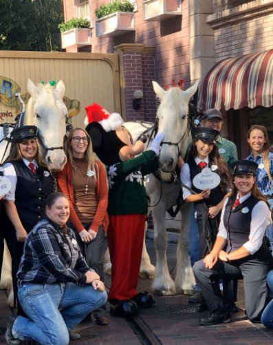 Two of Disneyland's Beloved Horses Are Now Retired Cast Members 1