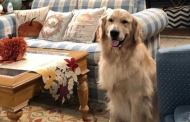 Cosmo the Dog from Fuller House dies from complications in surgery