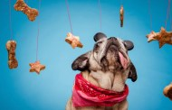 Make Delicious Dog Treats at Home with Recipes from Disney Chefs