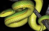 Scientists Name New Snake After Salazar Slytherin From Harry Potter