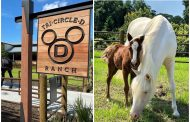 First Foal Born at Disney's Tri-Circle D Ranch!