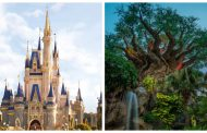 Relaxation Station locations for the Magic Kingdom and the Animal Kingdom
