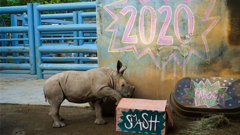 Disney World Animals say Goodbye to 2020