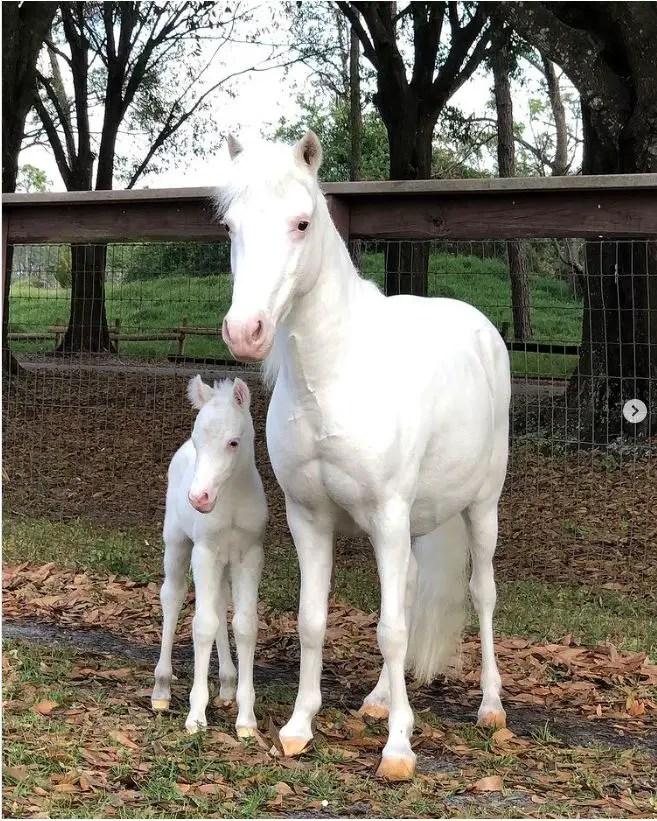 First look at baby pony born at Tri-Circle Ranch