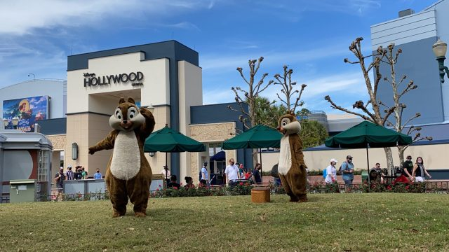 Have a picnic with Chip and Dale in Hollywood Studios 2