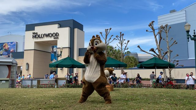 Have a picnic with Chip and Dale in Hollywood Studios 3