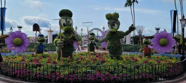 Flower and Garden