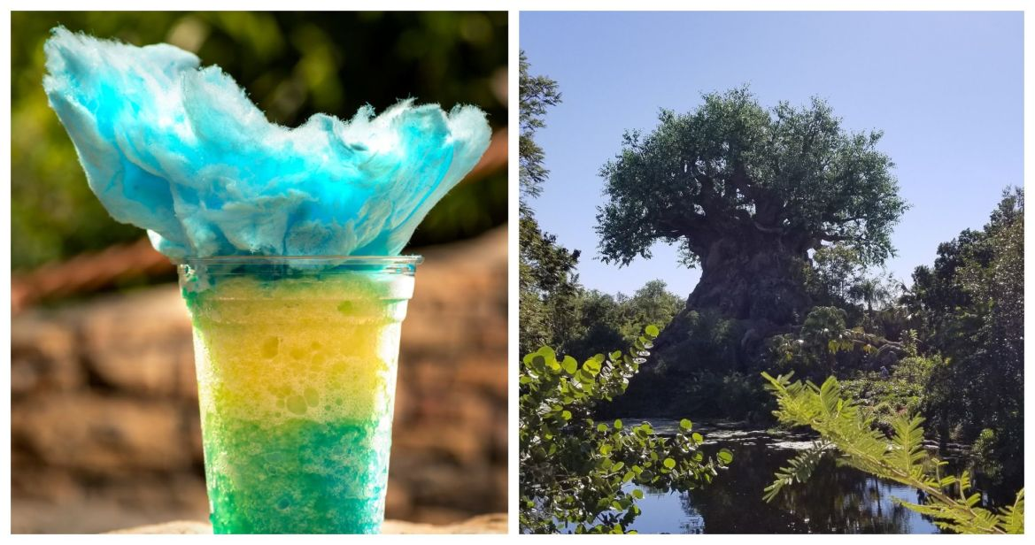 Try the Cotton Top Lagoon from Isle of Java at Disney's Animal Kingdom