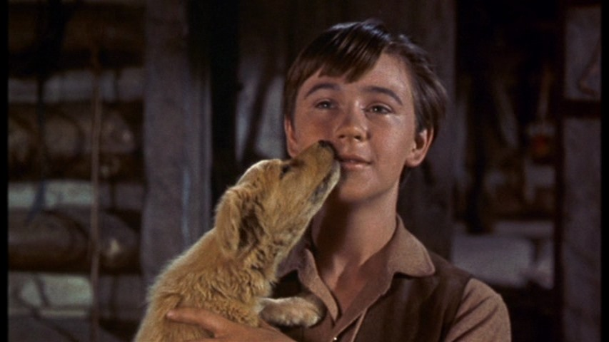 'Old Yeller' Star and Disney Legend Tommy Kirk Has Passed Away