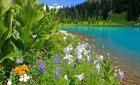 Wildflowers, Waterfalls and Wildlife Tours in Ridgway Colorado