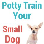 How To Potty Train Your Chihuahua Chi Pets