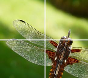 mosquito abatement image