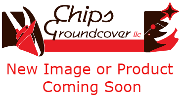 Chips New Image Coming Soon