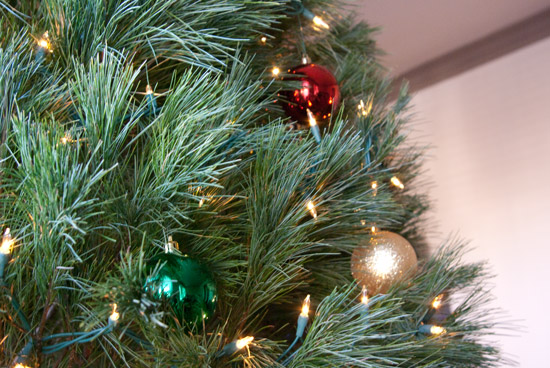 white-pine-branches-closeup