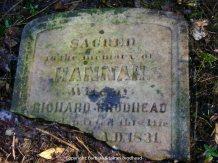 Top half of Hannah's stone, broken off by fallen tree