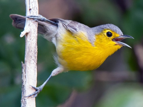 Birdwatching in Cuba