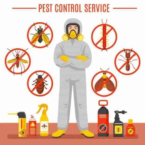 Pest Control Remedies