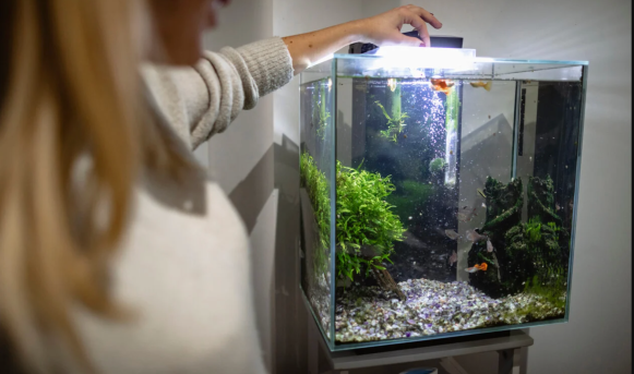 6 Important Things To Look Out for When Upgrading Your Aquarium