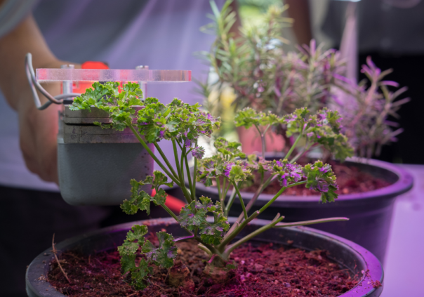 https://chiquehomeliving.com/5-tips-on-how-to-protect-your-led-grow-lights/