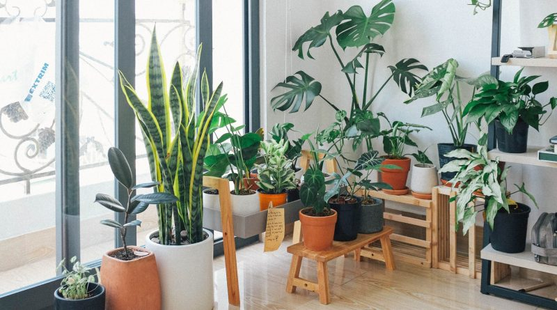 pexels huy phan 3076899 scaled Plants to Decorate Your Garden