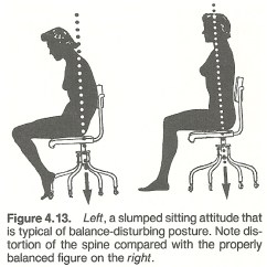 Posture Alignment Chair Sleeper Bed Chapter 4 Body And Gait