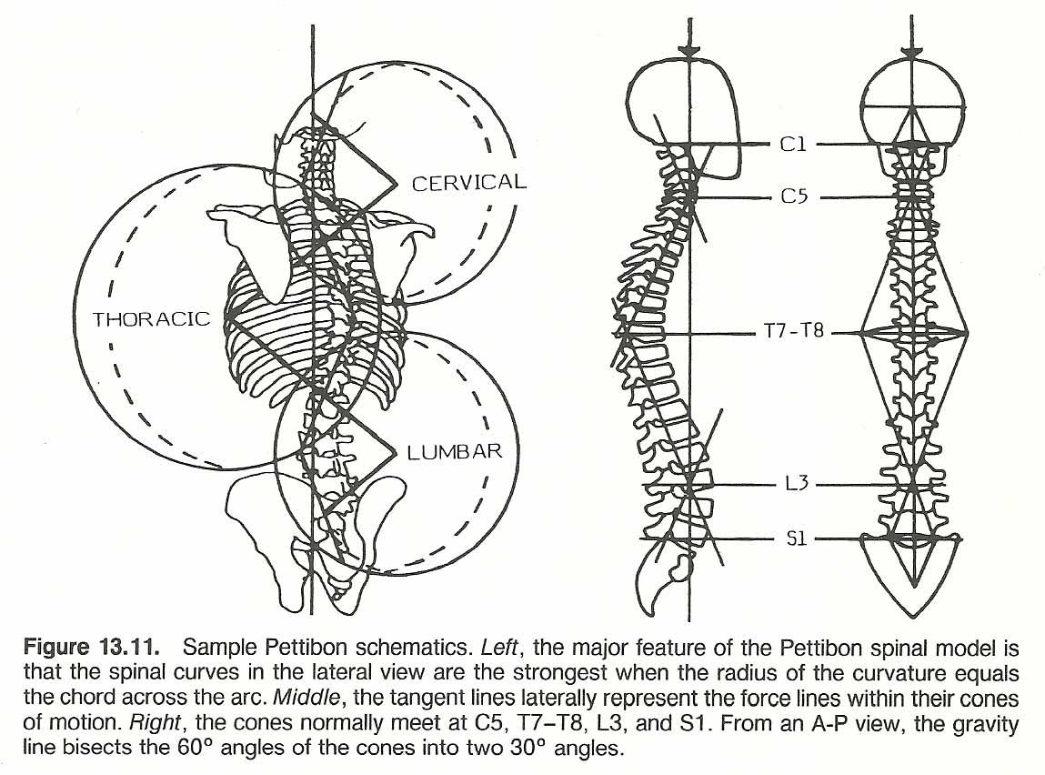 Cervical Scoliosis 25 97 102