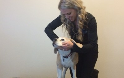 What to Expect After your Pet's 1st Animal Chiropractic Adjustment