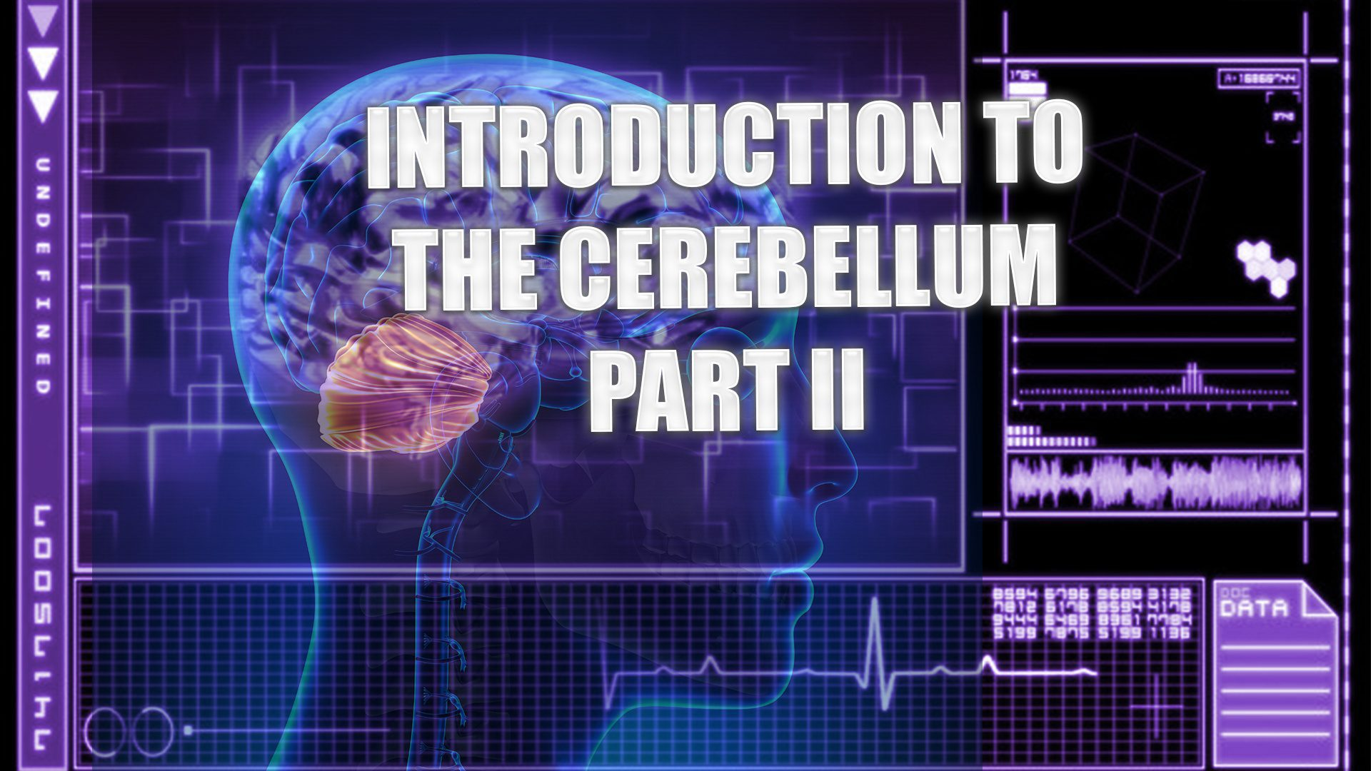 Introduction To The Cerebellum | El Paso, TX. | Part II