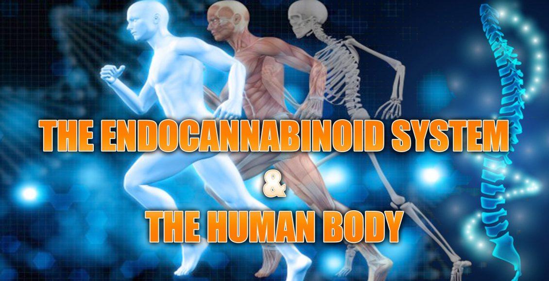 endocannabinoid el paso tx.