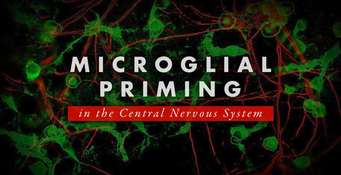 Microglial Priming in the Central Nervous System | El Paso, TX Chiropractor