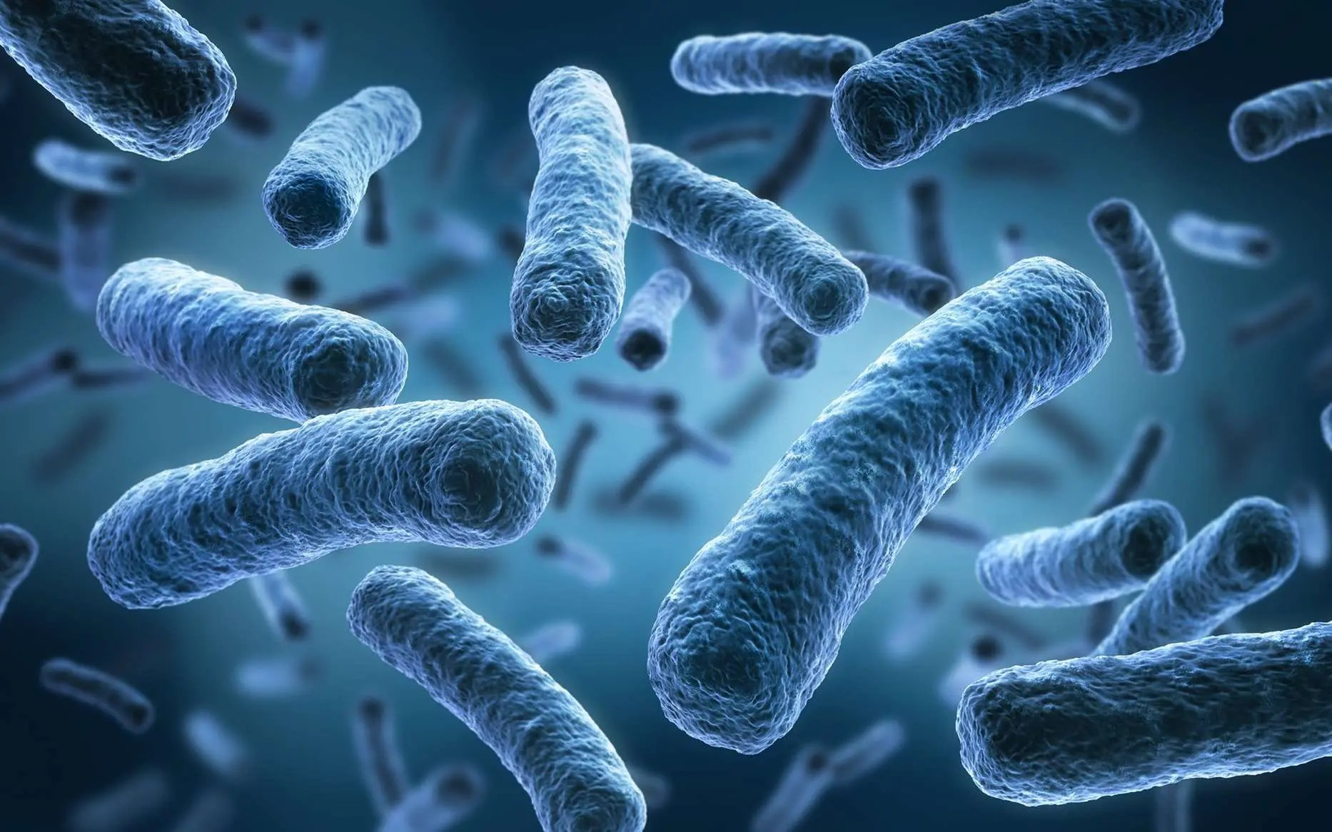Functional Neurology: The Brain and the Gut Microbiome Connection