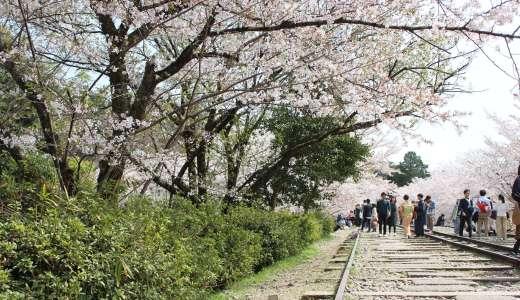 【京都-桜-】蹴上インクラインの桜は綺麗だけど難しい?