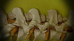 背骨の関節