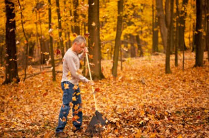 Man raking leaves as they fall, shallow depth of field.