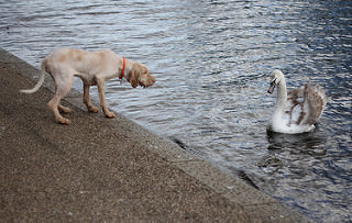 photo credit: Confrontation via photopin (license)