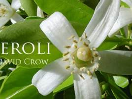 Neroli, A Gift From the Angels