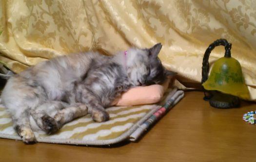 レイの昼寝