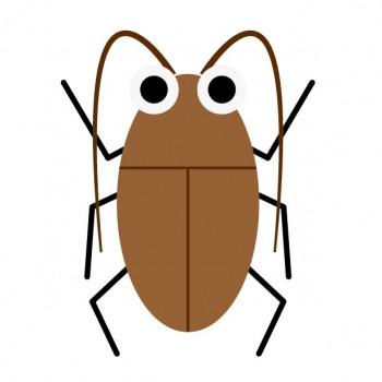 ゴキブリ卵について