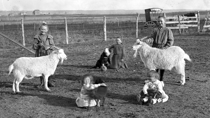 Historic photo of youth showing off their sheep, goat, dog and rabbit.