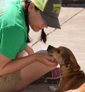 Volunteers help at the Bosque Animal Rescue Kennels, and get some puppy love in return.