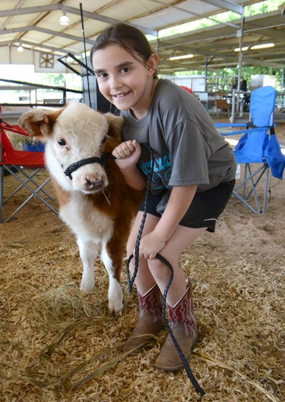 First-timers in the show ring, Heather Thiele and her four-month-old Mini Hereford calf before the 2020 Central Texas Youth Fair Heifer Jackpot Show for Bosque County residents only.