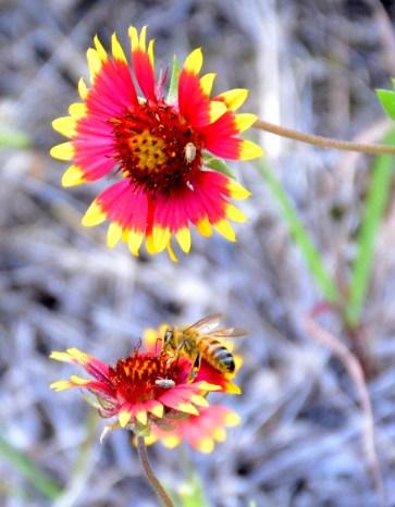 bee_flower6_web