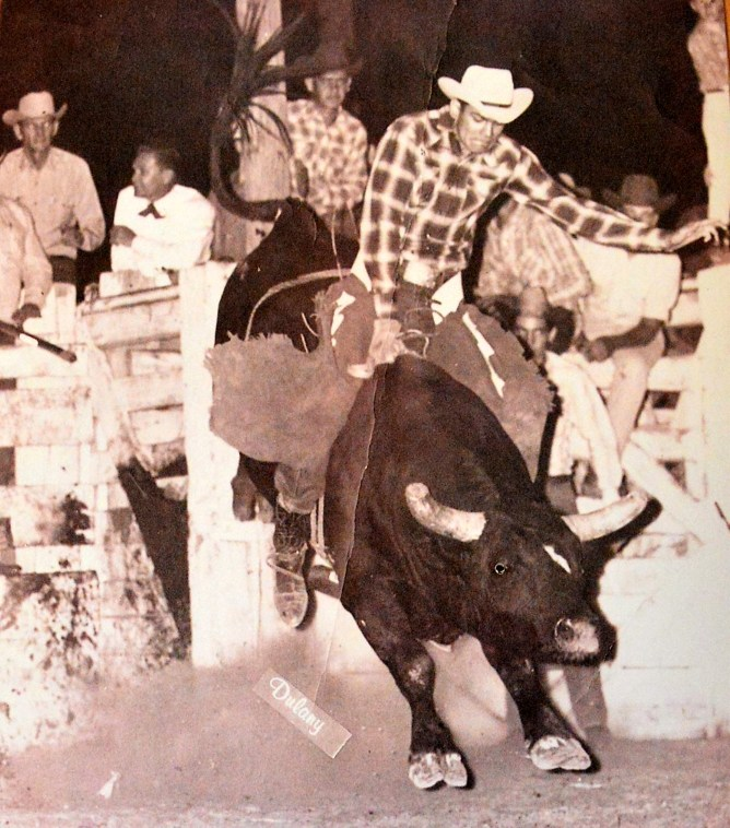 Jack Walker riding the bulls in Las Cruces, New Mexico in 1965.