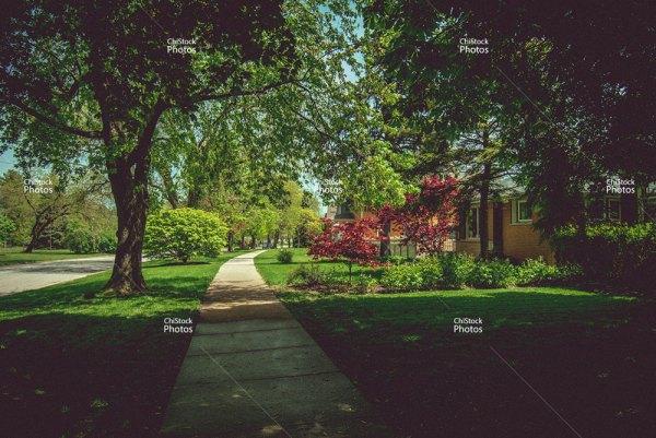 Soft Shades Norwood Park Tree Lined Street