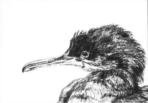 2015 Artists at Home Jill Meager 1, Shag fledgling