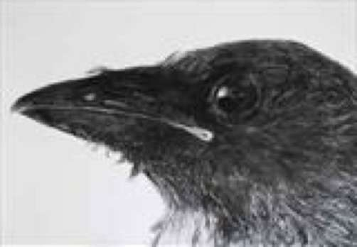 2015 Artists at Home Jill Meager 2, Crow fledgling (head)