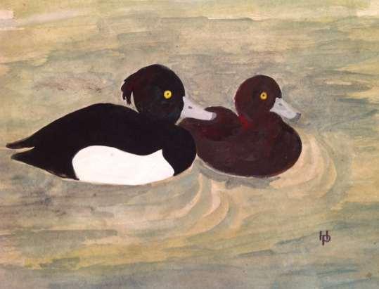 2016 Artists at Home Henrietta Parsons, Tufted Ducks